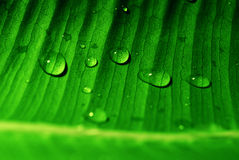 Waterdrops on the leaf. Big closeup of waterdrops on the green leaf royalty free stock photo