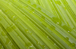 Waterdrops on a Leaf. A close up of waterdrops on a leaf Royalty Free Stock Photo