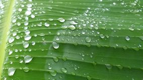 Waterdrops on a leaf. Nature, rain, green stock images
