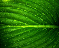 Waterdrops on a leaf. Picture of a Waterdrops on a leaf stock photos