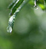 Waterdrops on a leaf. Picture of waterdrops, macro on morning grass royalty free stock photos