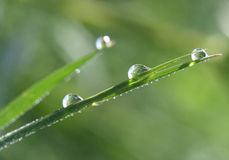 Waterdrops on a leaf Royalty Free Stock Images