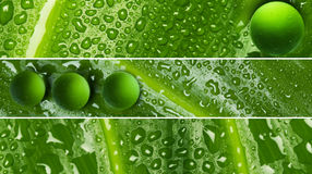 Waterdrops on leaf texture - banners Stock Photo