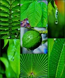 Waterdrops on leafs Stock Image