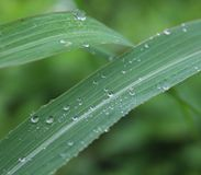Waterdrops on leaves Royalty Free Stock Images