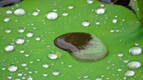 Waterdrops on  Lotus leaf Royalty Free Stock Photos
