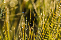 Waterdrops. Morning water drops on grass Royalty Free Stock Images