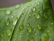 Waterdrops na folha Imagens de Stock Royalty Free