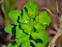 Waterdrops na małej roślinie Zdjęcie Royalty Free
