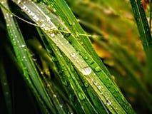 Waterdrops na trawie Obraz Stock