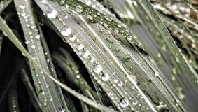 Waterdrops na trawie Obrazy Stock