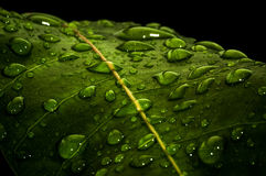 Waterdrops na zielonym liść Obraz Royalty Free