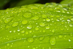 Waterdrops op blad Stock Foto