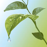 Waterdrops op Bladeren royalty-vrije illustratie