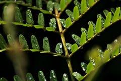 Waterdrops op Bladeren royalty-vrije stock foto