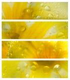 Waterdrops op de Reeks van de Banner van Bloemblaadjes Stock Foto