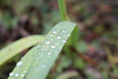 Waterdrops op een blad Stock Afbeeldingen