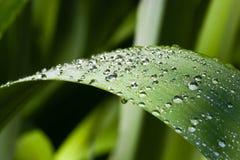 Waterdrops op een blad Royalty-vrije Stock Afbeelding