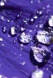 Waterdrops op een bloem Royalty-vrije Stock Foto's