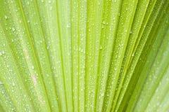 Waterdrops op palm stock foto's