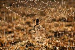 Waterdrops på en spindelrengöringsduk Royaltyfri Bild