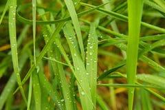 Waterdrops på gräs Royaltyfri Bild