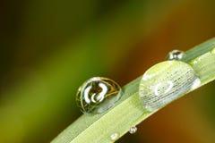 Waterdrops på gräs Royaltyfria Bilder