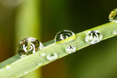 Waterdrops på gräs Arkivbilder