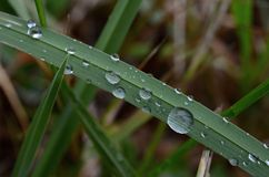 Waterdrops på gräs Arkivfoton