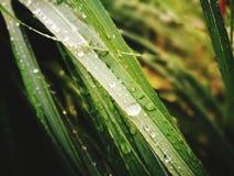 Waterdrops på gräset Royaltyfri Bild