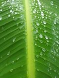 Waterdrops on a palm& x27;s leaf. Nature, rain, green stock photography