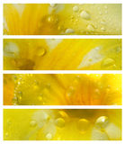 Waterdrops on Petals Banner Set Stock Photo