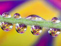8 waterdrops on plant Royalty Free Stock Image