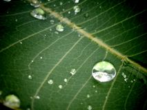 Waterdrops. Small new waterdrops in leaf Stock Photo