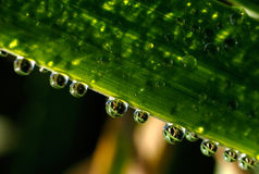 Waterdrops sur l'herbe Photo stock