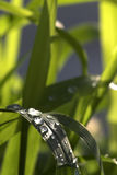 Waterdrops sur l'herbe Image stock