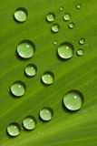 Waterdrops sur la lame verte Photos stock