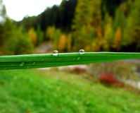 Waterdrops. Two waterdrops on the Leaf royalty free stock image
