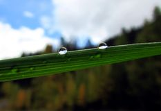 Waterdrops. Two small drops of water on the leaf Royalty Free Stock Photography