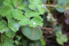 Waterdrops. On a leaf royalty free stock photo