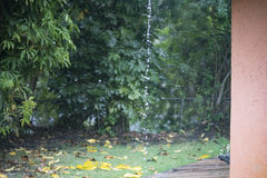 Waterdruppel na regens Stock Foto's