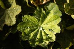 Waterdruppeltje op blad na onweer royalty-vrije stock foto