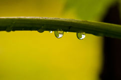 Waterdruppeltje op de cirrus Royalty-vrije Stock Foto's