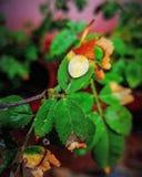 Waterdruppeltje op gekleurd blad stock afbeeldingen