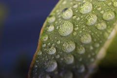 Waterdruppeltjes stock afbeeldingen