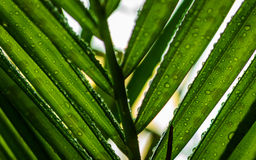 Waterdruppeltjes, Groene Bladeren Stock Afbeeldingen