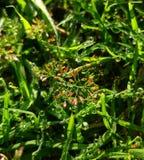 Waterdruppeltjes op bloemen met groene grasrijke achtergrond stock afbeelding