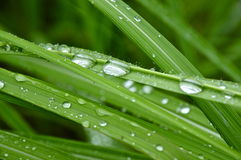 Waterdruppeltjes op grassleaves Stock Fotografie