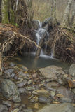 Waterfal. Natural tunnel of love formed by trees in Romania Royalty Free Stock Images