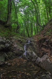 Waterfal. Natural tunnel of love formed by trees in Romania Royalty Free Stock Photography